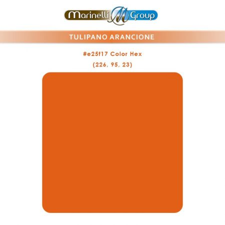 TULIPANO-ARANCIO